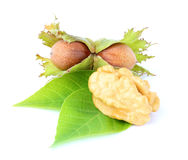 Hazelnut and walnut. Stock Photo