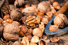 Hazelnut and walnut Stock Image
