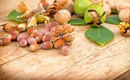 Hazelnut and walnut Stock Photo