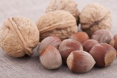 Hazelnut and walnuts on textile background close up Royalty Free Stock Photo