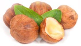 Hazelnut on white background Stock Images