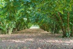 Hazelnut wood in italy Royalty Free Stock Image