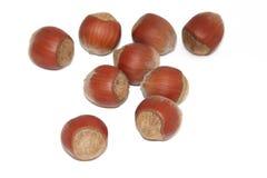 Hazelnuts. Safe nuts isolated on white Stock Image