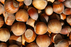 Hazelnuts. This is a bundle of hazelnuts in shell, like nice nature background Stock Images