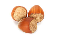 Hazelnuts. Three hazelnuts on white background stock image