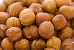 Hazelnuts Stock Photo