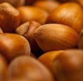 Hazelnuts. Simple photo: bowl full of hazelnuts Stock Image