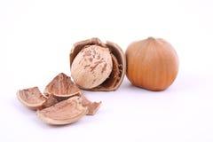 Hazelnuts. Two hazelnuts isolated on white Stock Photo