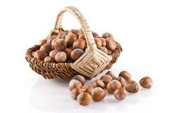 Hazelnuts. Stock Images