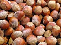 Hazelnuts. A group of hazelnuts close-up Stock Photos