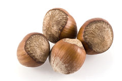 Hazelnuts. Royalty Free Stock Image