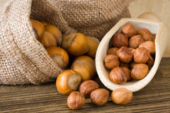 Hazelnuts. Ripe hazelnuts in a bags Stock Photography
