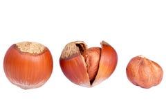 Hazelnuts Royalty Free Stock Photography