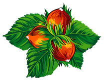 Hazelnuts 2 Stock Image