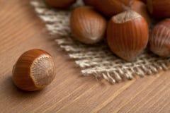 Hazelnuts Stock Images