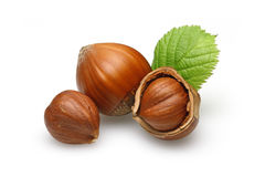 Hazelnuts. Group of hazelnut with leaves Stock Images