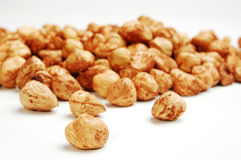 Hazelnuts. Some nuts on white background stock photography