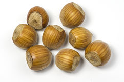 Hazelnuts. Some Hazelnuts on white background royalty free stock photo