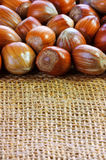 Hazelnut background Stock Image