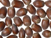 Hazelnuts. Isolated on white background royalty free stock photo