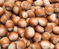 Hazelnuts. Close-up view of hazelnuts Royalty Free Stock Photos