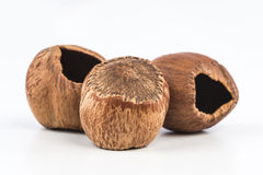 Hazelnuts zdjęcia stock