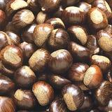 hazelnuts Imagem de Stock