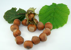 Hazelnuts. In white isolation. Autumn fruits Royalty Free Stock Images