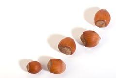 Hazelnuts. Hazelnut which is good omega reserves Royalty Free Stock Photo