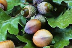 Hazelnuts and Acorns Royalty Free Stock Photography