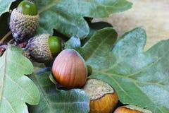 Hazelnuts and Acorns Stock Images