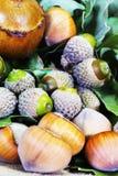 Hazelnuts and Acorns Stock Photos