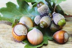 Hazelnuts and Acorns Royalty Free Stock Photos