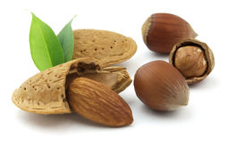 Hazelnuts and almond Royalty Free Stock Image