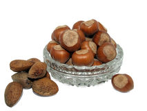 Hazelnuts and almonds in the bowl Royalty Free Stock Image