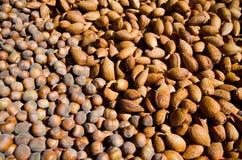 Hazelnuts and almonds Stock Photos