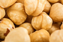Hazelnuts as background Stock Image
