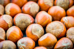 Hazelnuts. Stock Photography