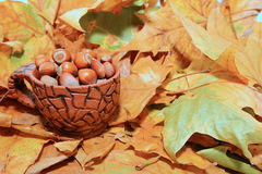 Hazelnuts in autumn Royalty Free Stock Photography