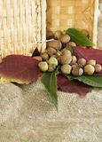 Hazelnuts and autumn foliage Stock Photography