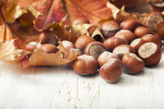 Hazelnuts and autumn leaves Royalty Free Stock Images
