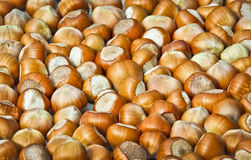 Hazelnuts background Stock Photography