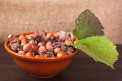 Hazelnuts background art Royalty Free Stock Photography