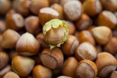 HAzelnuts, background Stock Images