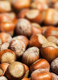 Hazelnuts background macro. Heap of hazel nuts Stock Images