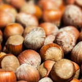 Hazelnuts background macro. Heap of hazel nuts Stock Image