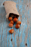 Hazelnuts in a bag. Stock Image