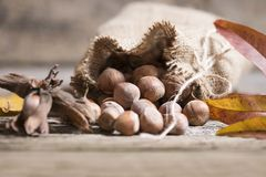 Hazelnuts in bag Stock Images