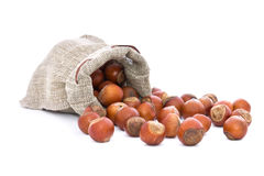 Hazelnuts in bag. The picture shows a bag and roll out of it hazelnuts Stock Photography