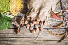 Hazelnuts in bag Stock Photography